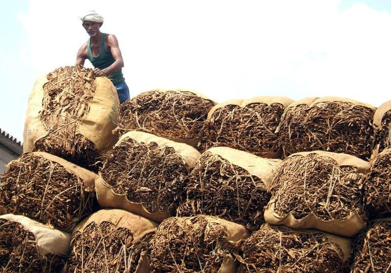 Karnataka Halts Tobacco Auctions