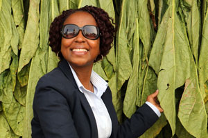 Ample Tobacco Seed in Zimbabwe