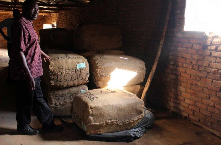 Uganda to Tax Unprocessed Leaf Tobacco
