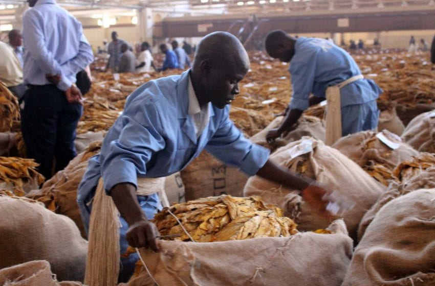 Malawi President Urges Diversification