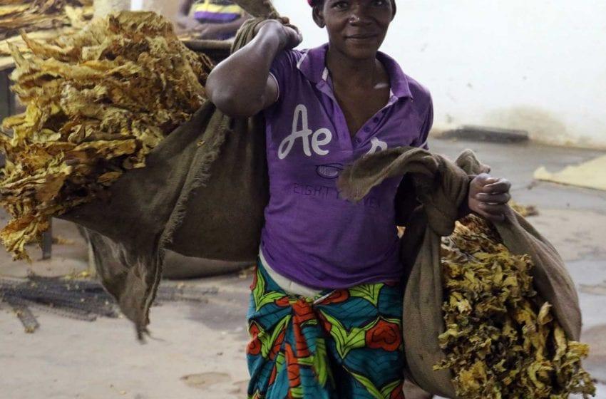 Zimbabwe: First Bale Fetches $4 per Kilo