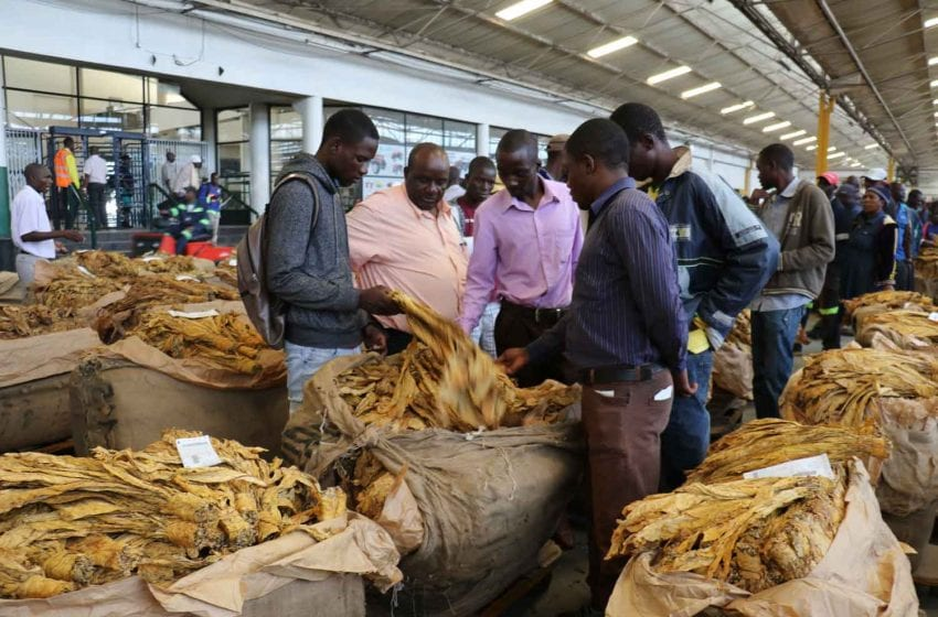 Leaf Traders Report Losses in Zimbabwe