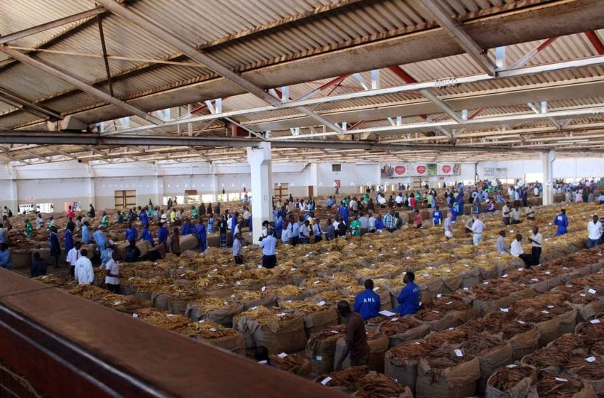 Malawi: Tobacco Earnings up by 27 Percent