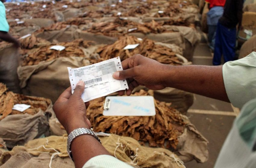 Pandemic Takes Toll on Malawi Leaf Earnings