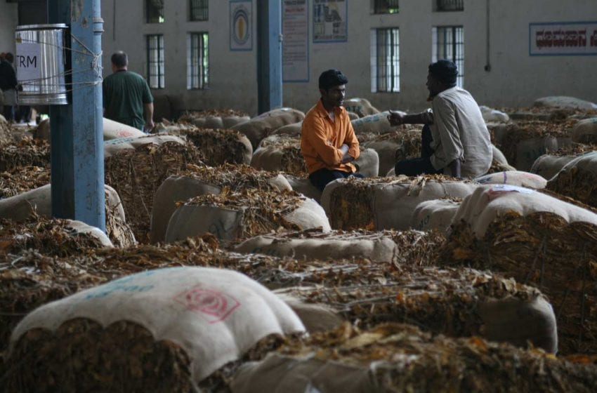 Tobacco Auctions Suspended Due to Covid