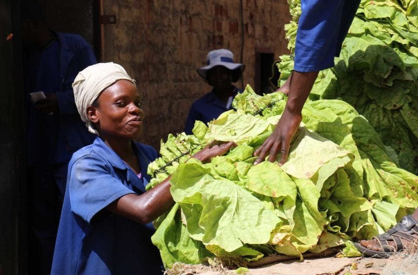 Zimbabwe: Output Expected to Stay Firm
