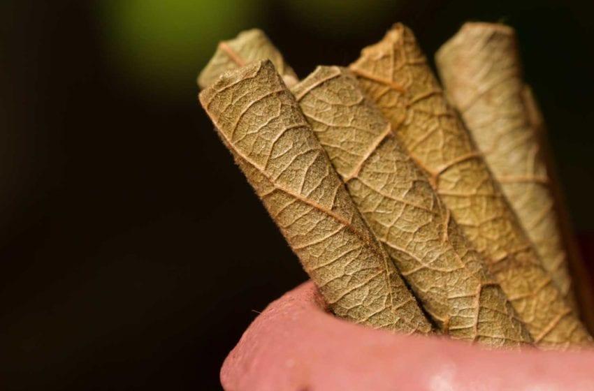 India Bans Per-Stick Bidi and Cigarette Sales