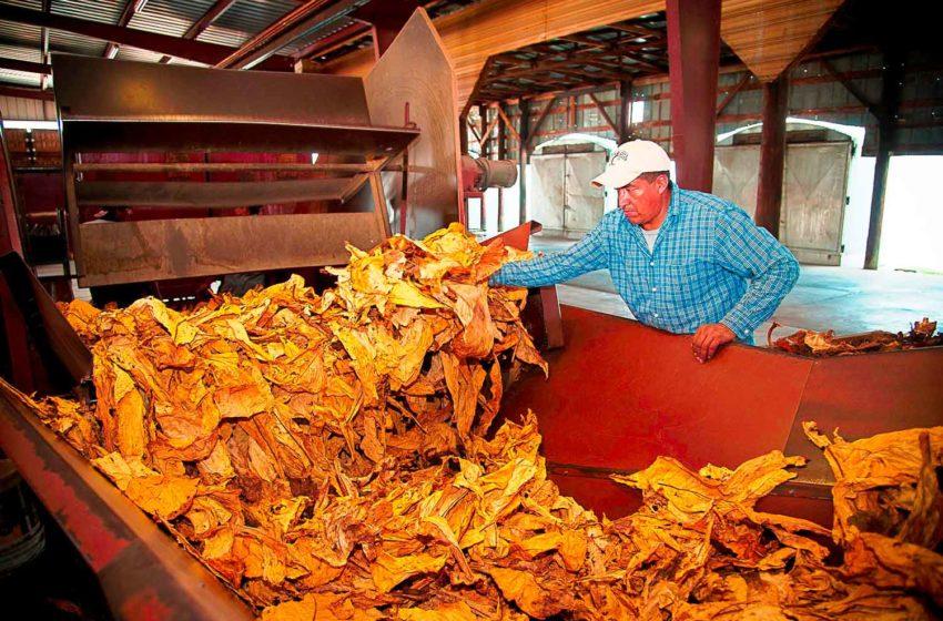 EU to Impose Tariffs on American Tobacco