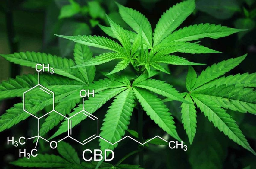 22nd Century Patent for Cannabis Technology