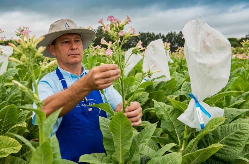AOI Promotes Grower Income Diversification