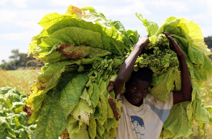 Farmers Targeted by Dishonest Middlemen