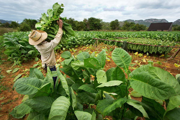 Newman Petitions to Import Cuban Tobacco