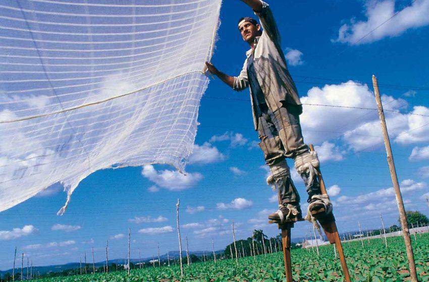 Cuba Starts Planting for 2021-2022 Season